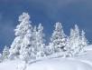 snow-on-trees.jpg